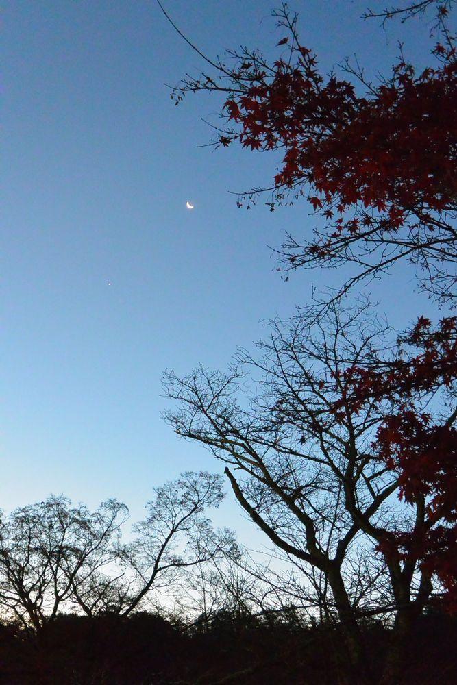 下弦の月と名残の紅葉(2015.12.07 06:28)