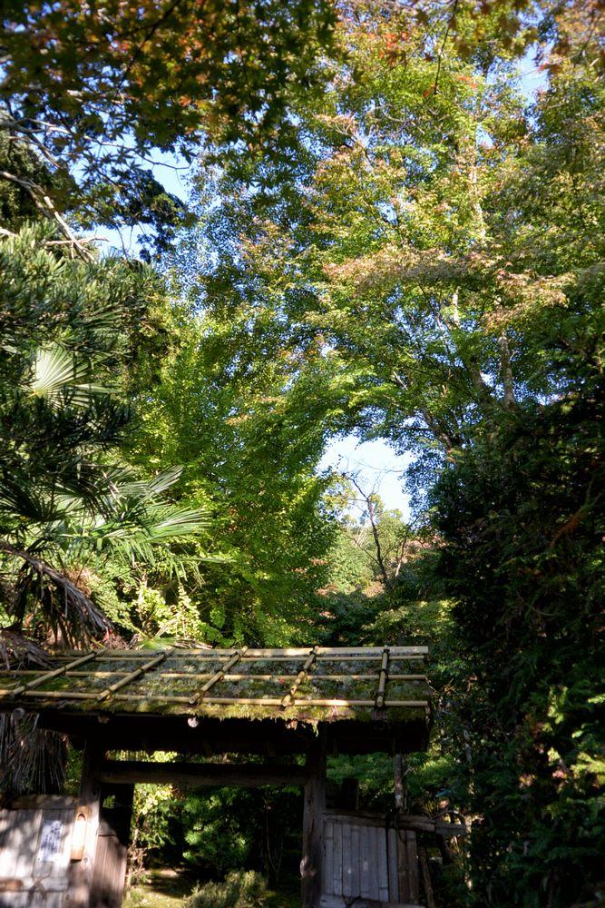 お寺の庭の入口とモミジ(2016.11.05 08:22)